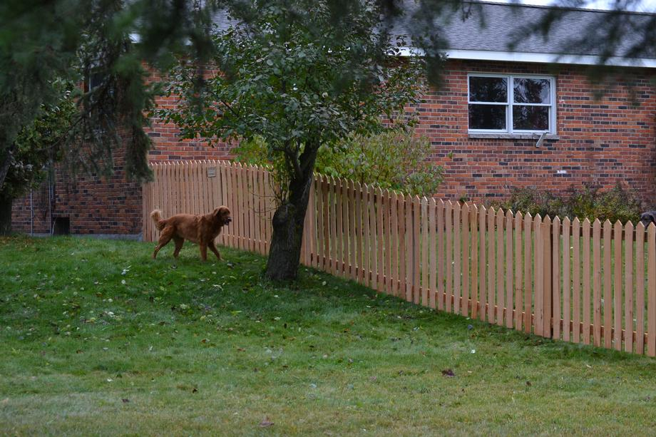 Is it privacy you are looking for? Affordable Privacy fencing in Stevens Point, WI