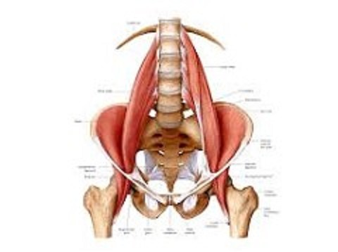 Tight and Shortened Psaos Muscles Cause Low Back, Hip and Knee Problems