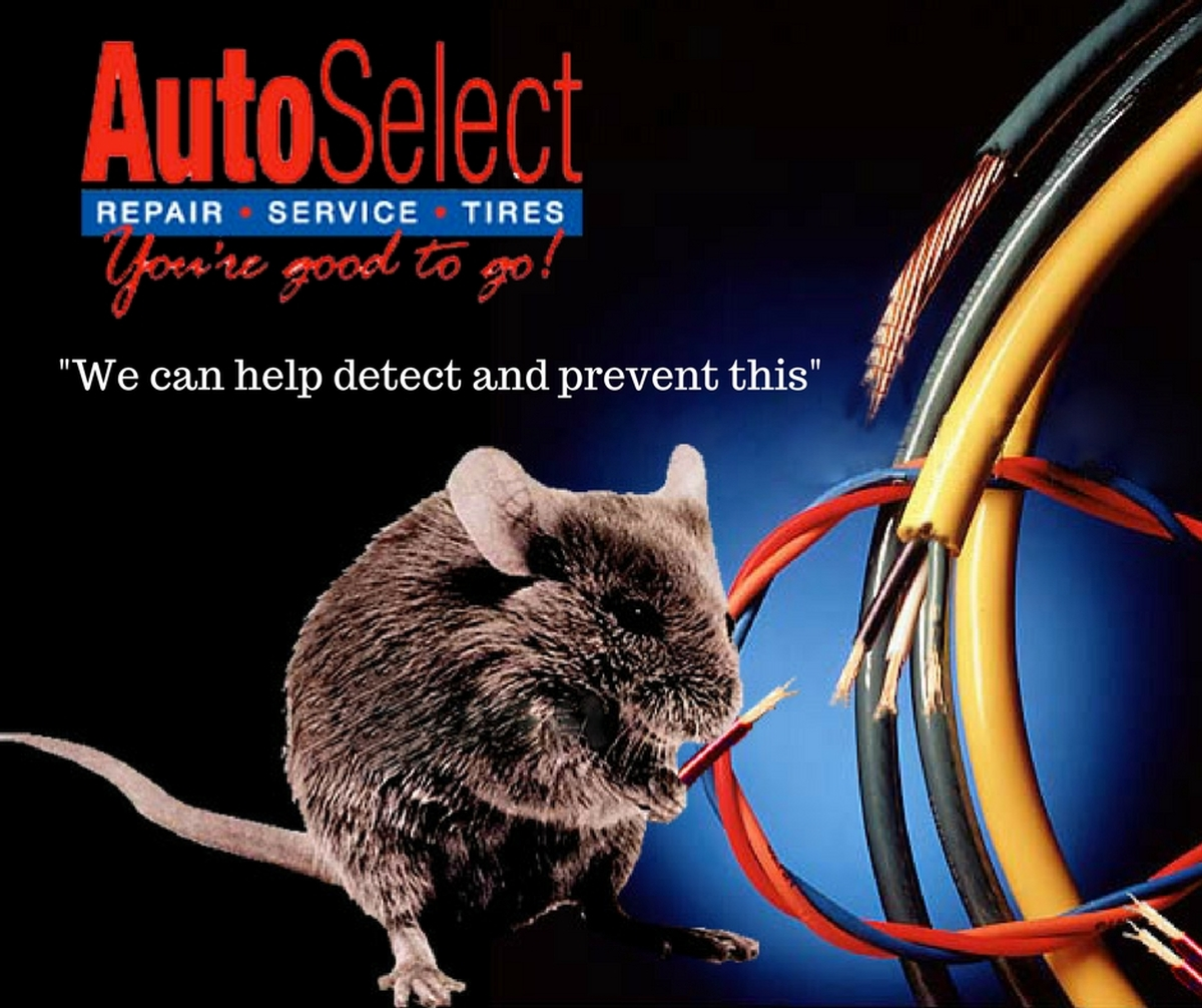 rodents chewing on your automotive wiring? learn how to detect and prevent  this from happening to your vehicle