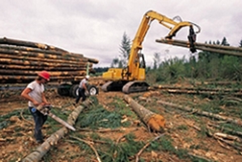 Timber Management Services in Rhinelander WI - Timber Appraisal