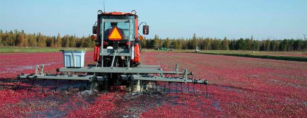 Wisconsin's Best Cranberries Cooperative