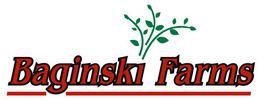 Certified Seed Potatoes for sale by Baginski Farms, Inc.