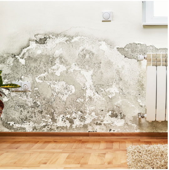 mold remediation in Stevens Point, WI