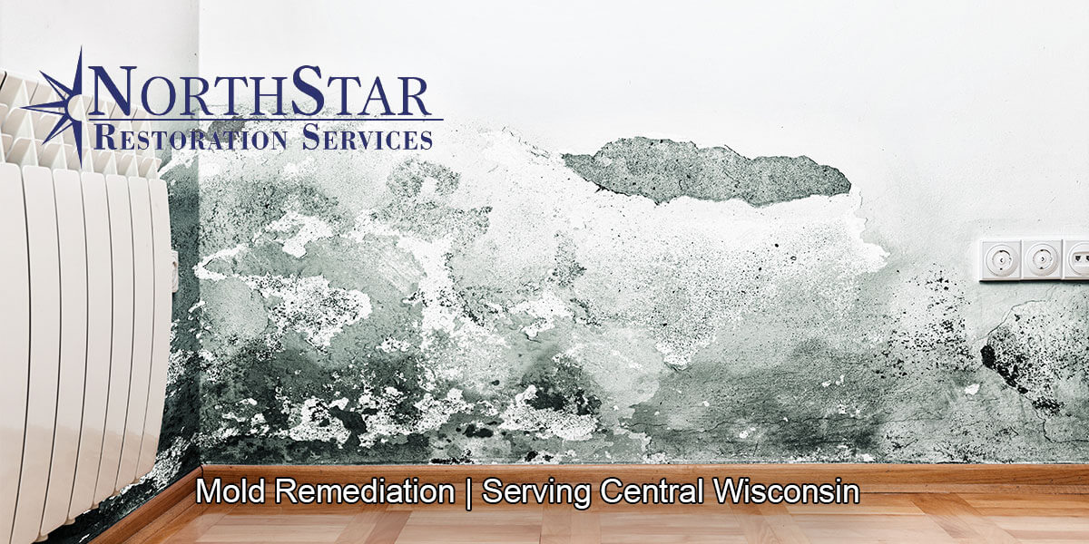 Professional black mold removal in Mosinee, WI