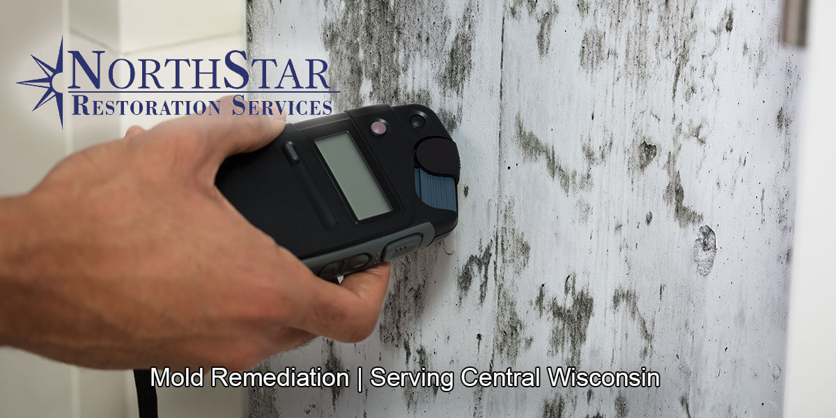 Professional black mold remediation in Almond, WI