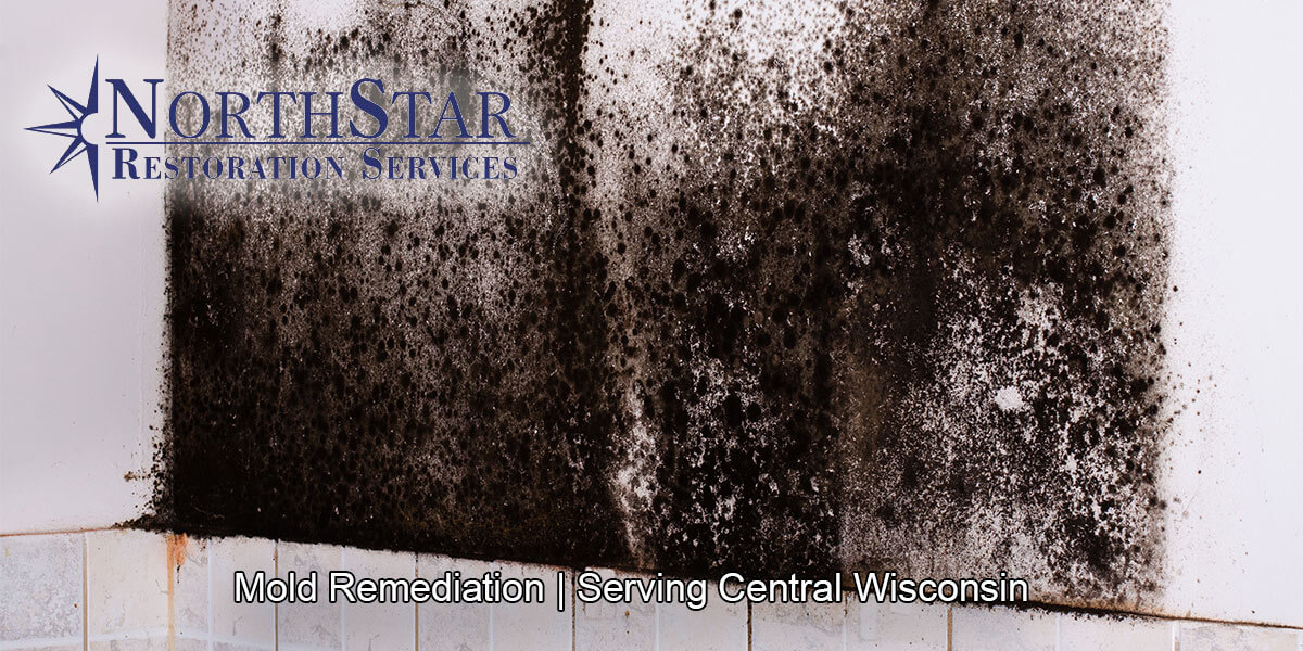 Professional black mold removal in Wisconsin Rapids, WI