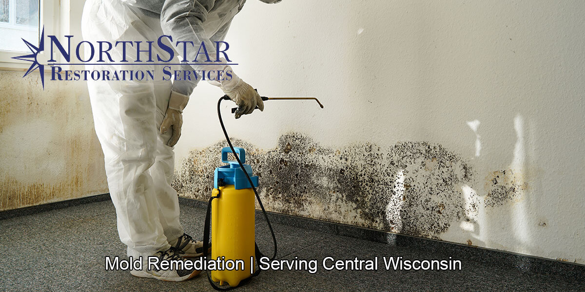 Black mold removal in Auburndale, WI