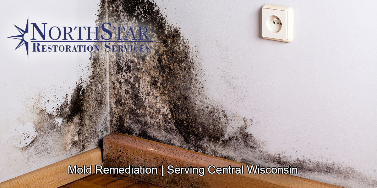 Black mold remediation in Wisconsin Rapids, WI